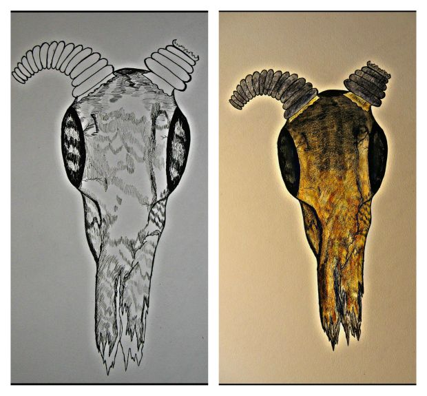 Antelope of sorts