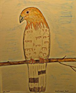 Broad-winged Hawk.