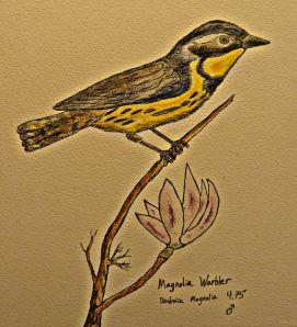 Magnolia Warbler.