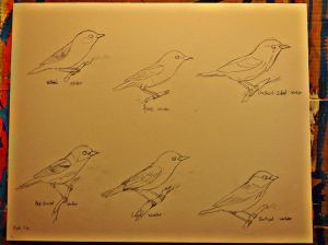 The fifth and final plate of warblers in pencil.