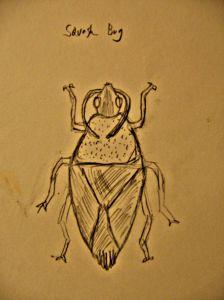 Squash Bug.