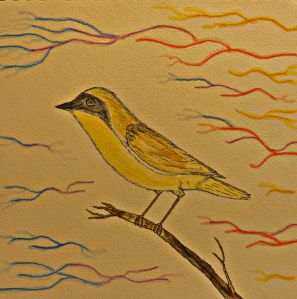 Common Yellow-throat.