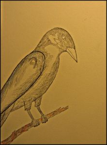 Crow sits on a pen drawn branch.