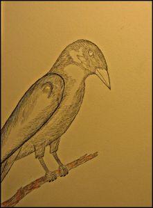 Crow sits on a pen drawn branch.
