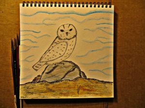 Snowy owl small watercolor illustration study.