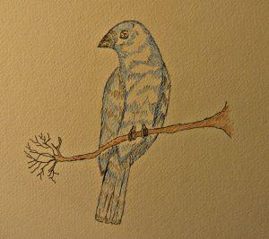 Indigo Bunting in micron pen.