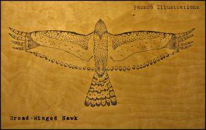 Broadwingedhawk.jpg