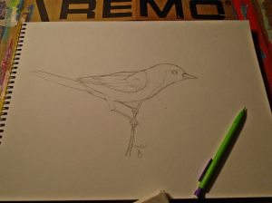 Hooded Oriole drawn onto watercolor paper. Looking to color this one soon.