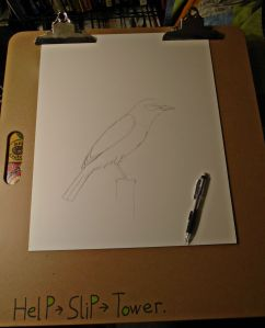 Scrub pencil Jay.