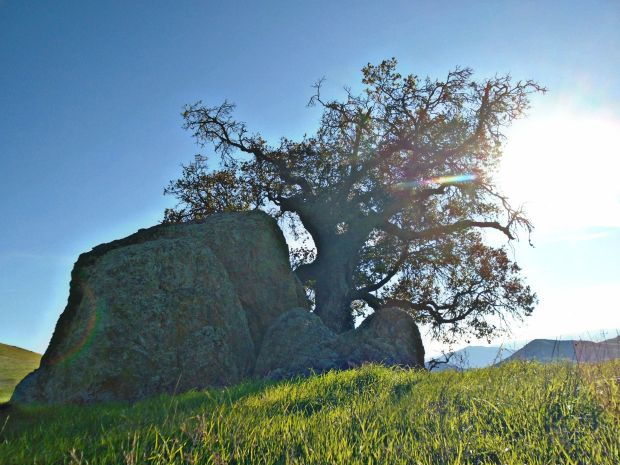 rocktree2.jpg