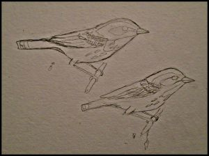 The first bird I saw out my window of my new home was to my absolute delight, a Townsend's Warbler. So it seemed like a great bird to put to page. The pencil work here.