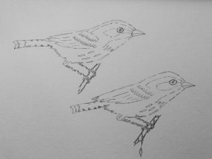 I decided to do the Male/Female combo like my Grandpa's old bird guide. The pen work here.