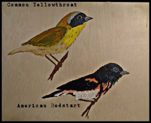 commonyellowthroatandredstart