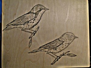 Kirtland's and Yellow-rumped Warblers.