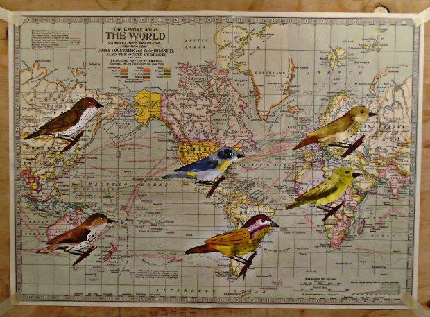 warblersoftheworldmap