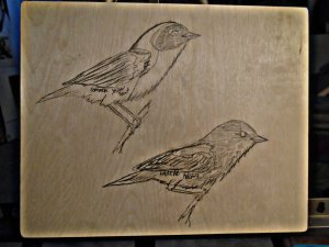 Common Yellow-throat and American Redstart.