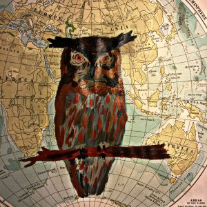 Eurasian Eagle Owl Bubo bubo
