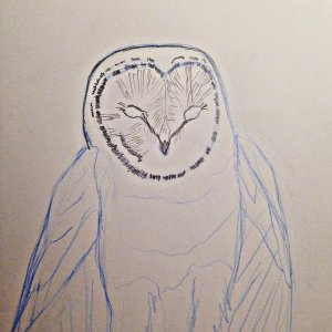 I've been reading a great book by Denny Rogers about illustrating Owls. It has been very helpful.