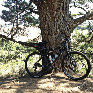 1. Ride my bike to a large tree and enjoy it.