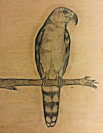 2 gyrafalcon pencil
