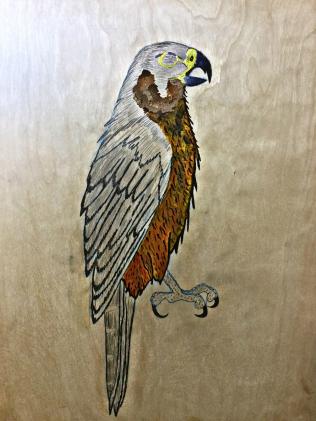 5 falcon3
