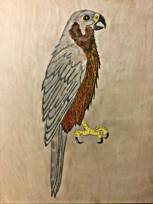 6 falcon 4