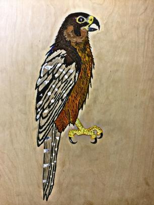 7 mo falco