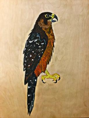 8 NZ falco final