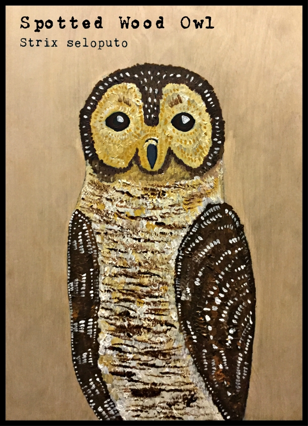 spotted-wood-owl-text-framed