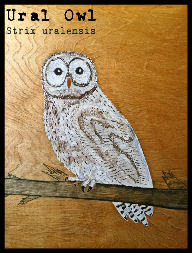 4 Ural Owl final TEXT