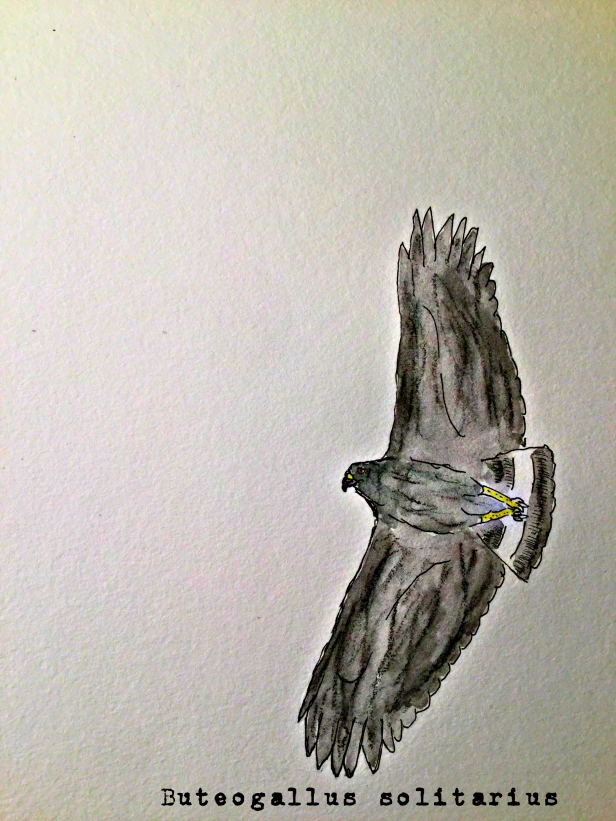 solitary eagle1TEXT