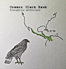 blackhawk1text