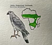 dark chanting goshawk