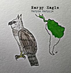 harpy again222