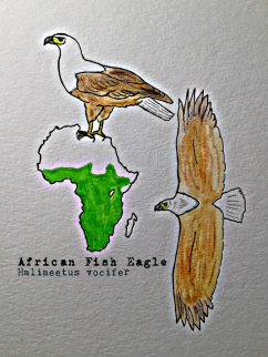 african fish eagleTEXT