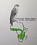 african hawk eagleTEXT