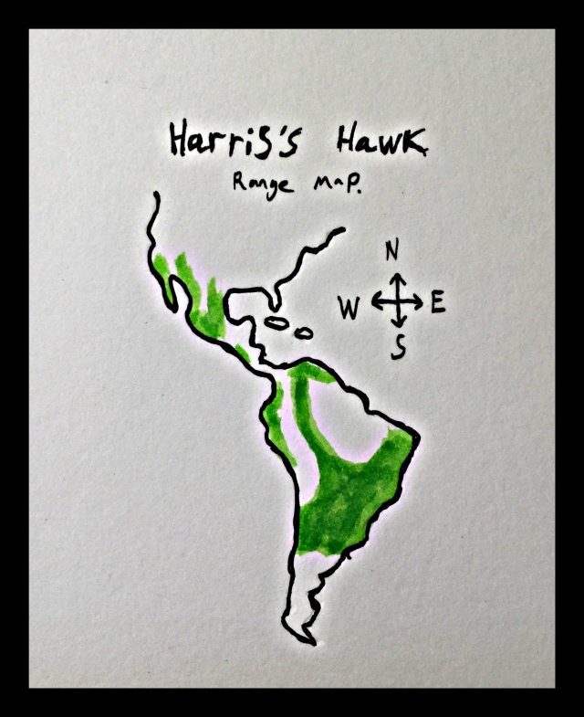 Hariss hawk map