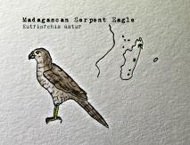 madagas serpent eagle1