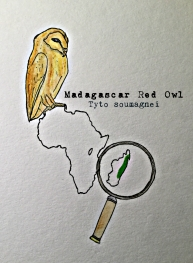 Maddy red owl