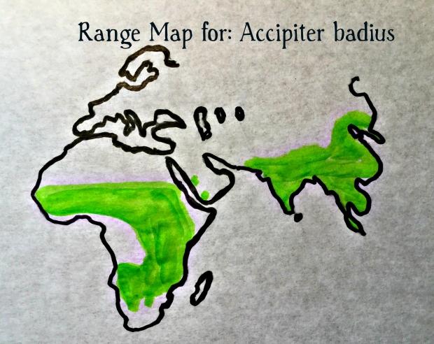 accipiter range map
