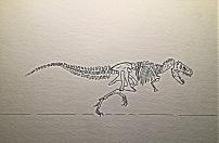 rex again skelotin