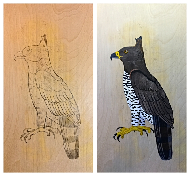 crowned hawk eagle process