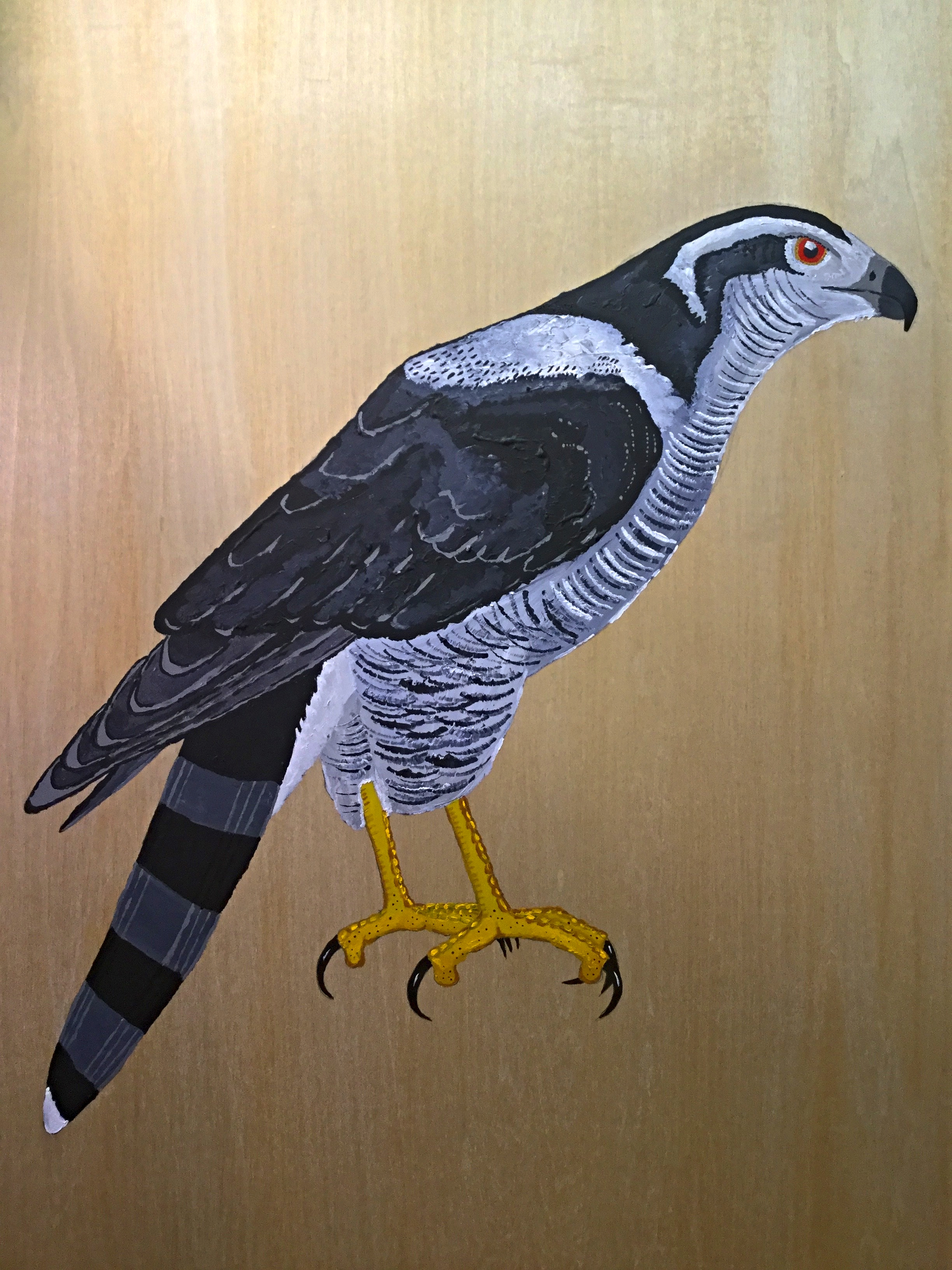 Northern Goshawk Panel